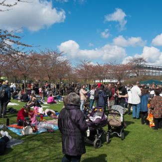 Copenhagen-Sakura-festival-18.jpg