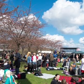 Copenhagen-Sakura-festival-22.jpg