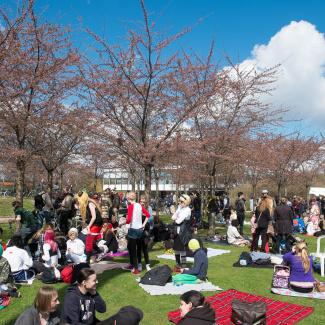 Copenhagen-Sakura-festival-16.jpg