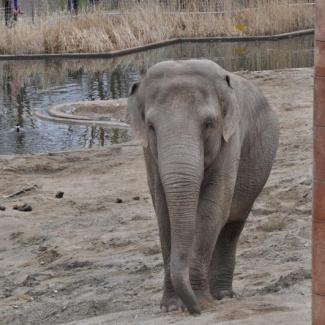 Copenhagen-Zoo-17.jpg