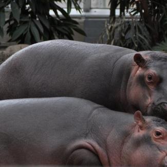 Copenhagen-Zoo-28.jpg