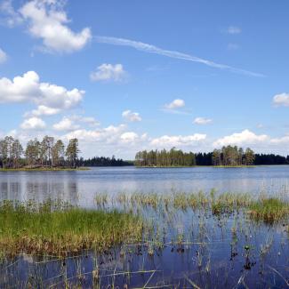 Søen Råstjå